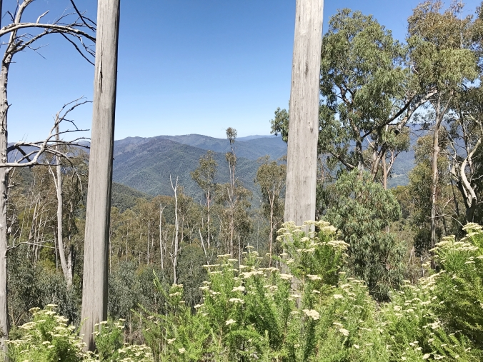 View from Mount Feathertop - Victorias highest peaks hike